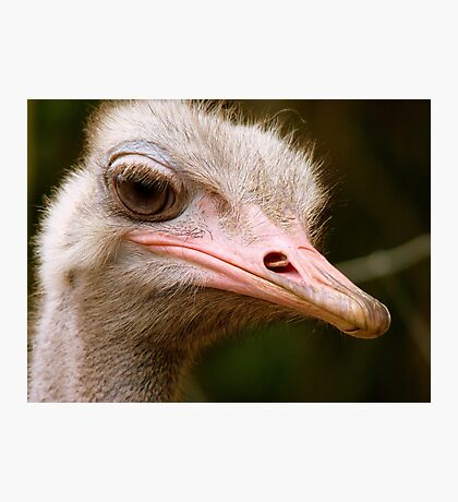 Who Said I Bury My Head In The Sand? - Ostrich - NZ Photographic Print