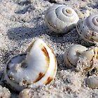 Sea Snails by LINDA ALTERN