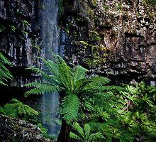 Bindaree Falls by Samantha Cole-Surjan