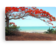 Flame Tree Canvas Print