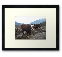Happy cows ! Framed Print