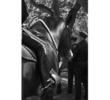 Gallant Steed IV Photographic Print