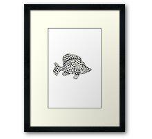 Panther grouper  Framed Print