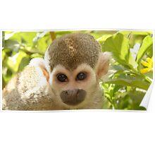 Plotting Monkey Poster