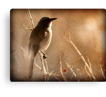 Scrub Jay - Winter Tree Canvas Print