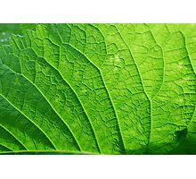 Veins of a leaf Photographic Print