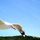 Flight by Brittany Schneider