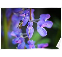 Mimicry in Nature Poster