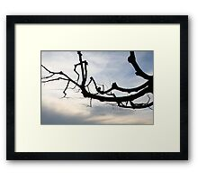 A Branch of Winter Framed Print