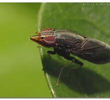 Unusual fly by dpastern
