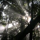 sun breaks through forest canopy by barnesy64