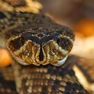 Rattler Head On by Terry Best