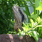 dragon in garden by barnesy64