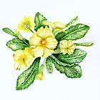 Yellow Polyanthus by Denise Martin