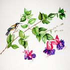 Eastern Spinebill on Fuchsia by Denise Martin