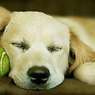 Ely...she sleeps! by Melinda Kerr