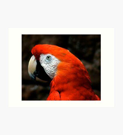 Rojo Art Print