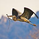 Nesting Material by Marvin Collins