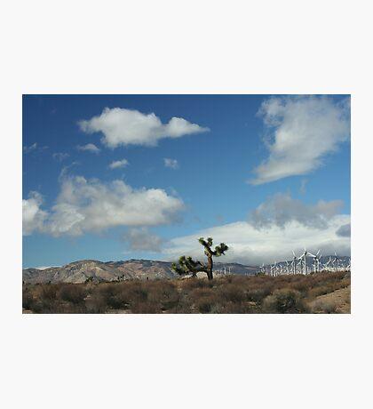 Oak Creek Canyon, CA Photographic Print