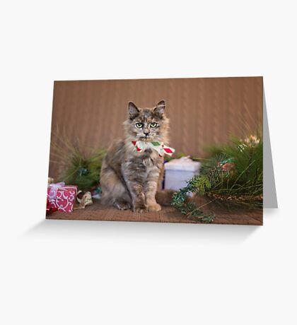 Christmas Tortie Greeting Card