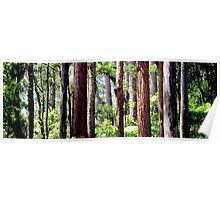 Coastal Rainforest Poster