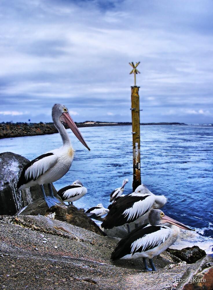 Pelicans by EbonyKate
