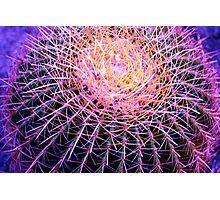 Cactus Ball Photographic Print