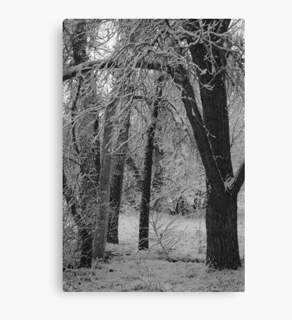 Monochrome Glade Canvas Print