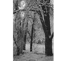 Monochrome Glade Photographic Print