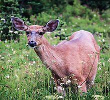 Grazing Deer at Mount Rainier by Nicole Petegorsky