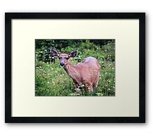 Grazing Deer at Mount Rainier Framed Print
