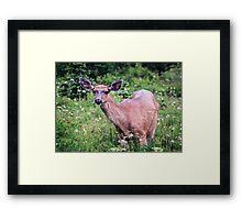 Grazing Deer at Mount Rainier Framed Print