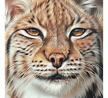 Faces of the wild - Lynx Photographic Print