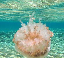 """The World Below"" Shark Bay, Western Australia by wildimagenation"