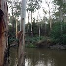 Yarra near Warrandyte Bridge #6 by Tatterhood