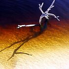 RADIANT WATERS by LINDA ALTERN