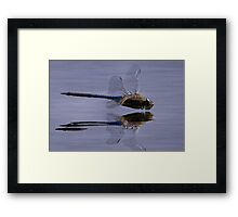 The Art Of A Dragonfly Framed Print
