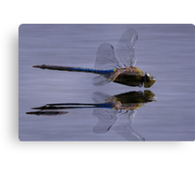 The Art Of A Dragonfly Canvas Print