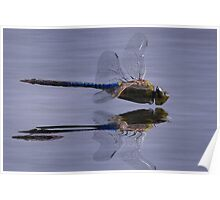 The Art Of A Dragonfly Poster