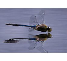 The Art Of A Dragonfly Photographic Print