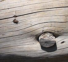 Old Wood by Melanie PATRICK