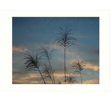 Tall grass at dawn Art Print
