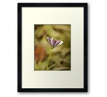 Lone purple daisy botanical photography Framed Print