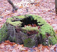 mossy stump by storm22