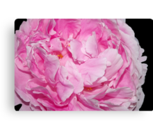 partial pretty pink peony Canvas Print