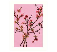 Cherry Blossoms from Amphai Art Print