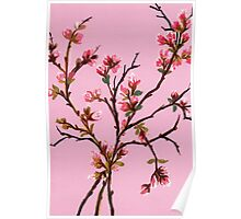 Cherry Blossoms from Amphai Poster