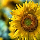 Sunflower by Ganz