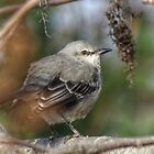 Mockingbird by ChuckBuckner