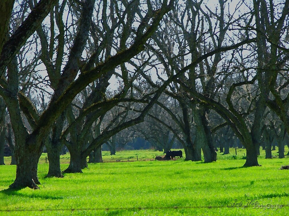 Cows Amongst the Pecan Trees by Judy Gayle Waller